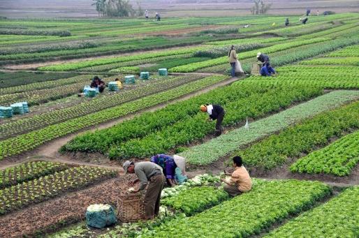 Nông sản an toàn và trái tim người Việt